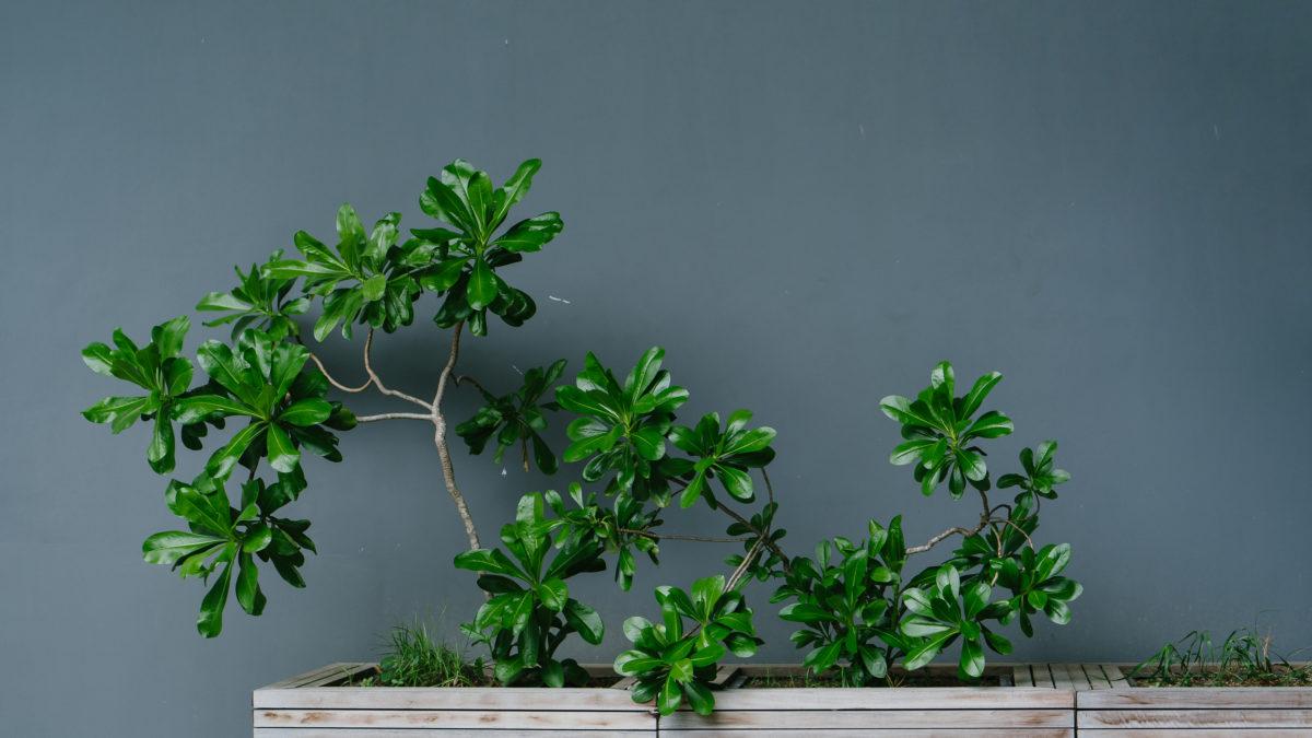Gir egentlig grønne planter bedre inneklima?