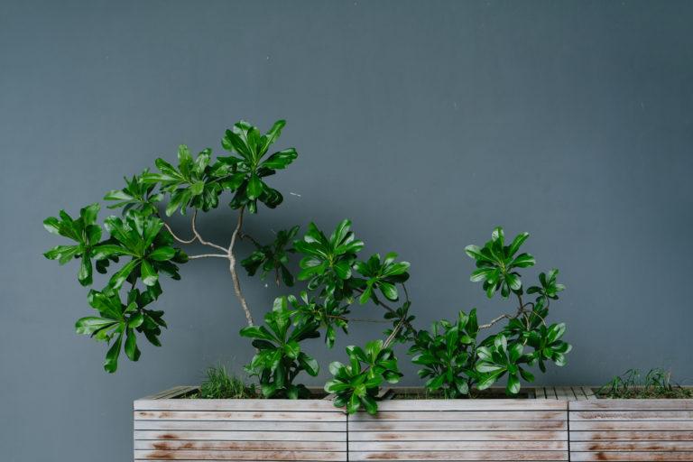 Bilde av grønn inneplante