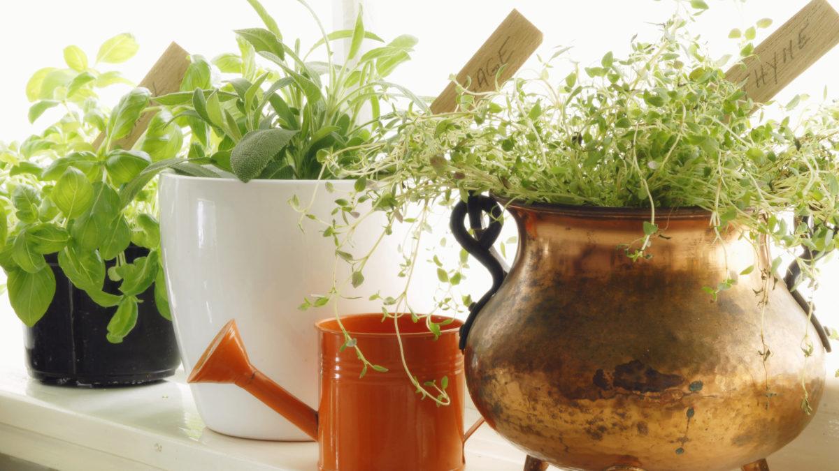 Lag din egen urtehage innendørs