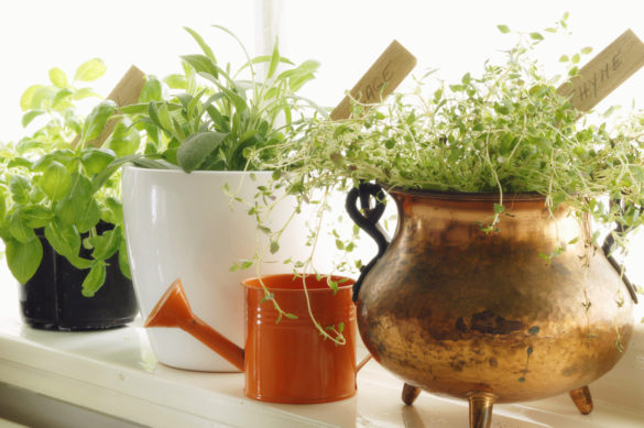 Ferske urter i vinduskarmen