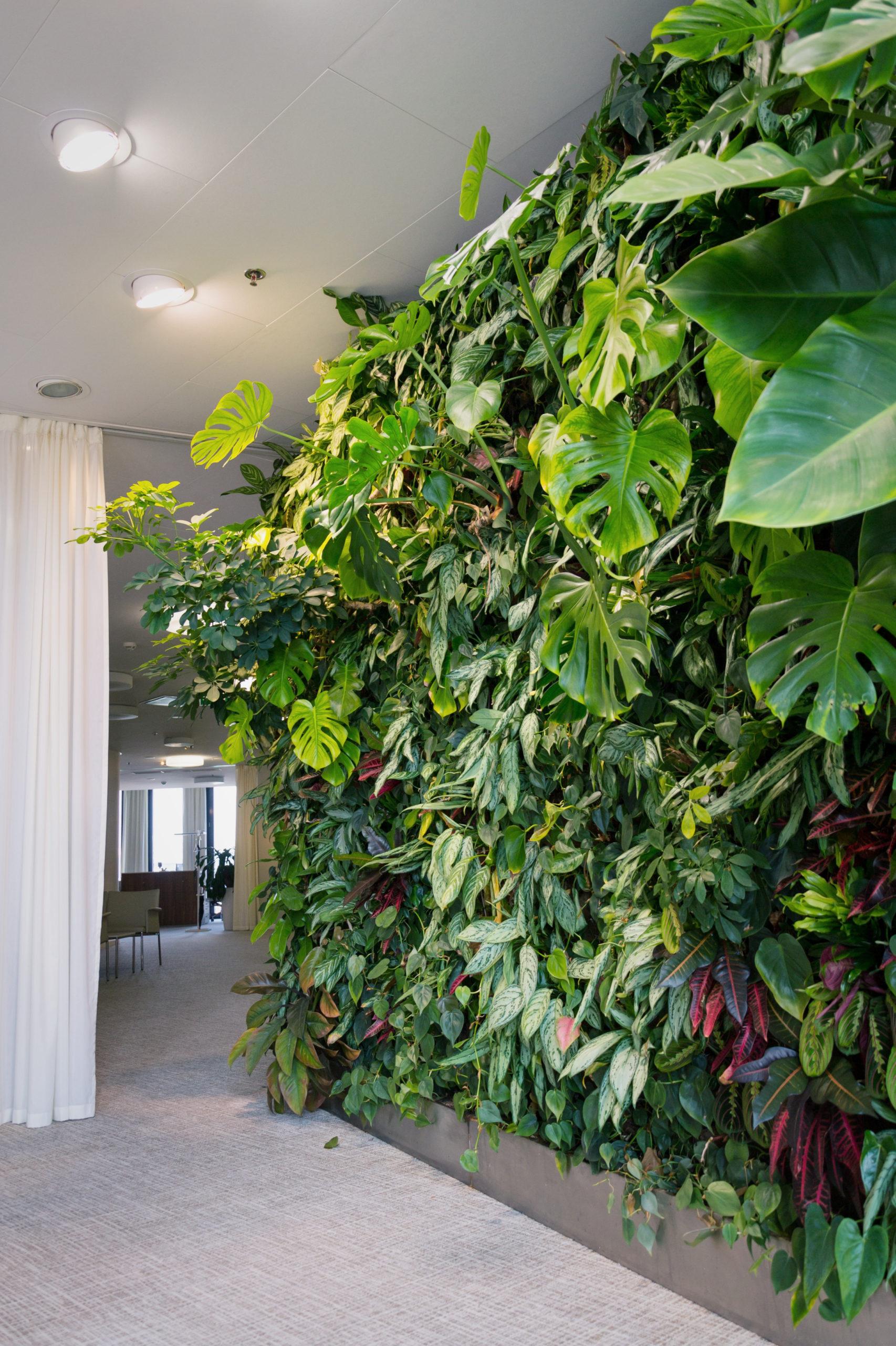 Levende grønn vertikal vegg med grønne planter og blomster