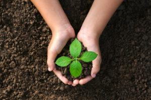 Frøplante som skal plantes ned i jorden