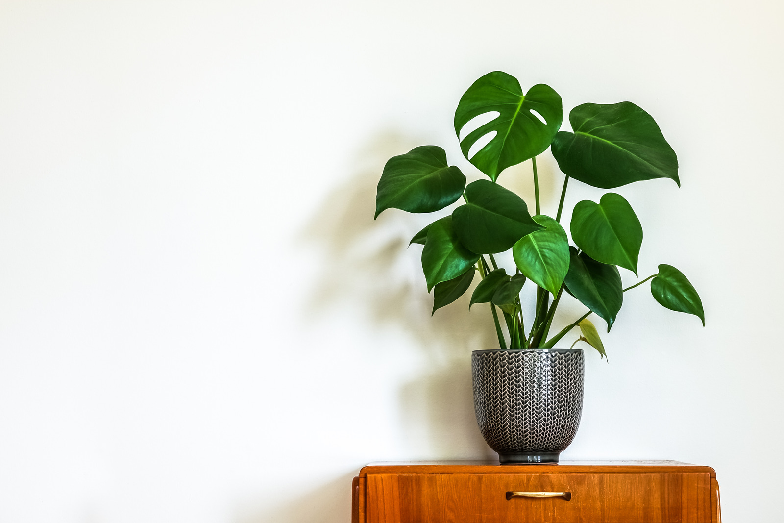 Stor og grønn inneplante