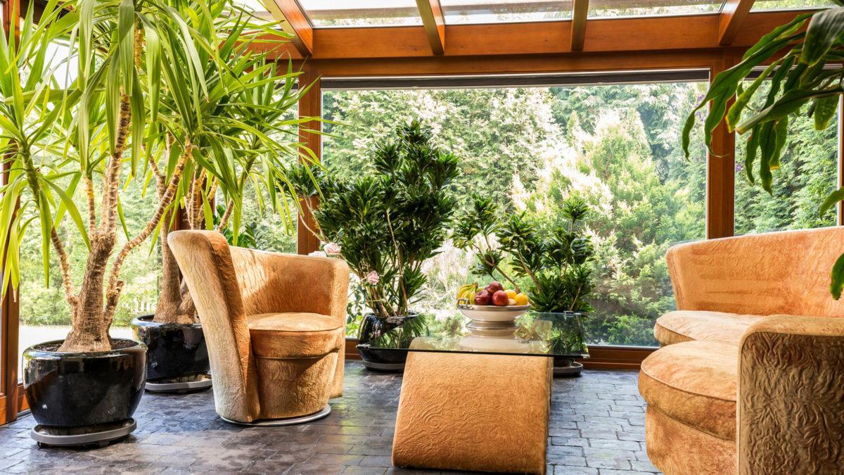 Store grønne planter til stuen