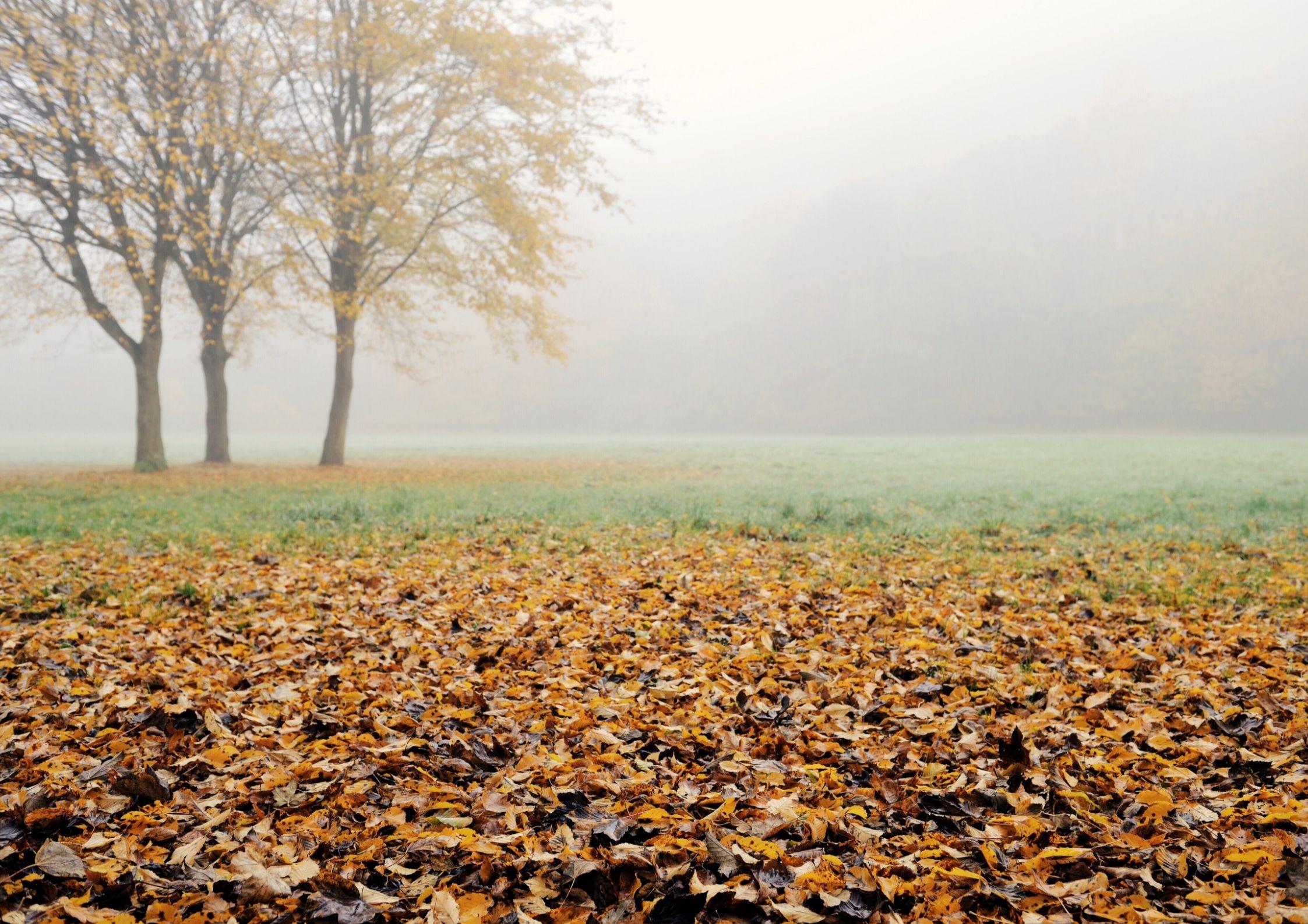 Hage på høsten